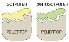что такое фитоэстрогены