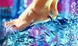 пилинг рыбками garra rufa