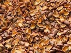 скорлупа кедровых орешков