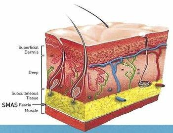мышечно-апоневротический слой