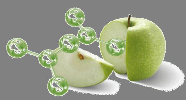 сорт яблок Uttwiler Spatlauber.